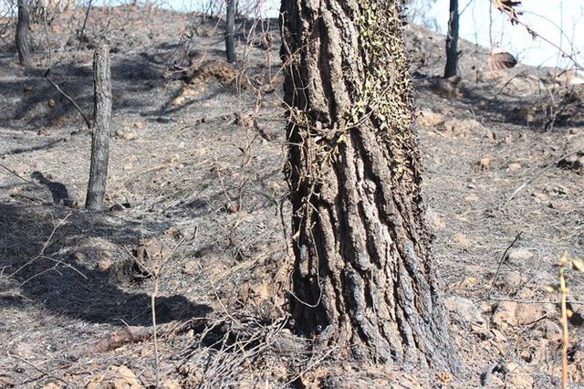 Tan hoang rừng thông Hà Tĩnh, tro than bay mịt mù sau 3 ngày hỏa hoạn - Ảnh 7.