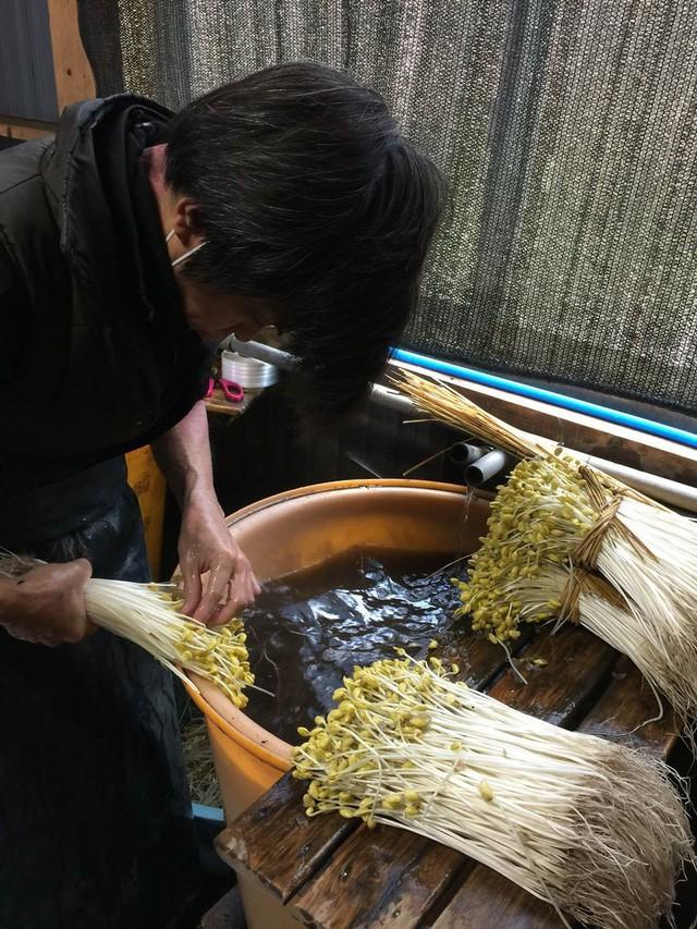 Bí mật thú vị của Ohori Onsen - loại giá đỗ dài hơn 2 gang tay: Trồng ở suối nước nóng, hơn 400.000 nghìn/kg - Ảnh 3.