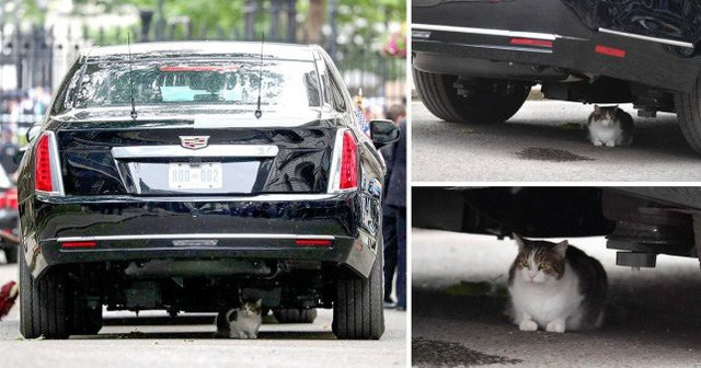 Bất ngờ kẻ dám chặn xe Quái thú của Tổng thống Trump ngay trước mắt Thủ tướng Anh - Ảnh 2.