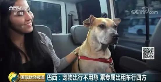 Brazil mở dịch vụ taxi dành riêng cho chó, mèo và nhiều con khác nữa - Ảnh 4.
