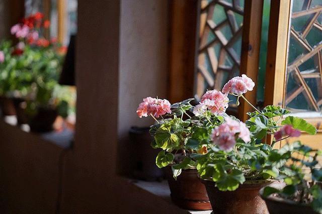 Cặp vợ chồng lập trình viên từ chối mua nhà ở thành phố, về quê xây nhà nhỏ bên khoảng sân vườn trồng rau và hoa mỗi ngày - Ảnh 16.