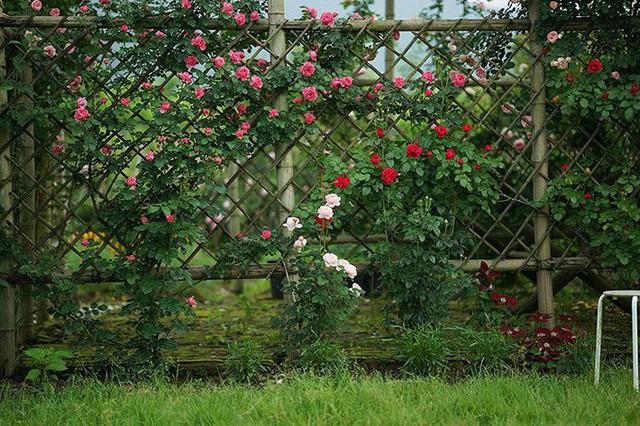 Cặp vợ chồng lập trình viên từ chối mua nhà ở thành phố, về quê xây nhà nhỏ bên khoảng sân vườn trồng rau và hoa mỗi ngày - Ảnh 6.