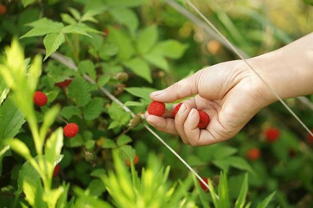 Cặp vợ chồng lập trình viên từ chối mua nhà ở thành phố, về quê xây nhà nhỏ bên khoảng sân vườn trồng rau và hoa mỗi ngày - Ảnh 9.