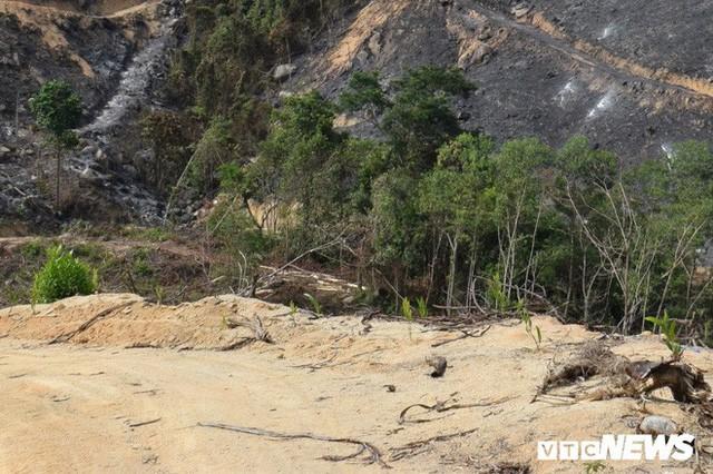 Ảnh: Xót xa rừng Quảng Nam chìm trong biển lửa suốt 22 tiếng, 107 ha keo bị thiêu rụi  - Ảnh 3.