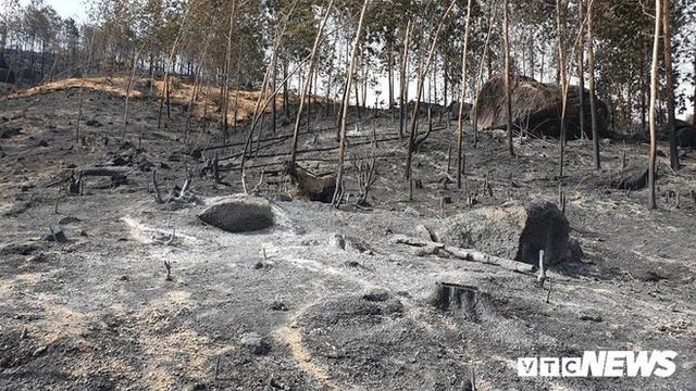 Ảnh: Xót xa rừng Quảng Nam chìm trong biển lửa suốt 22 tiếng, 107 ha keo bị thiêu rụi  - Ảnh 5.