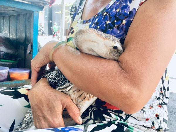 Hiếm muộn 24 năm, vợ chồng Sài Gòn gọi vịt là con, ăn ngủ cùng - Ảnh 4.