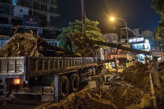 Hà Nội: Di dời hàng trăm cây hoa sữa về bãi rác Nam Sơn lớn nhất thành phố - Ảnh 3.