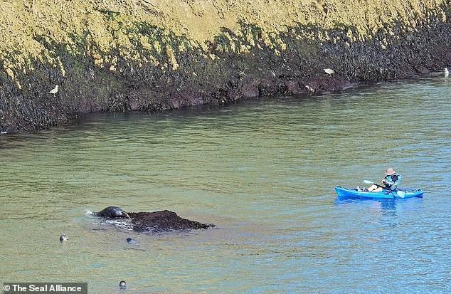 Hình ảnh thay cho vạn lời nói: Hải cẩu đồng loạt ném mình xuống vách đá vì bị du khách dồn ép đến đường cùng - Ảnh 3.