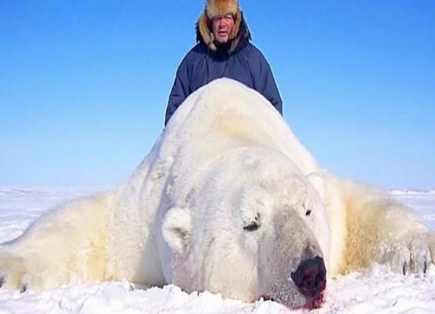 Vạch trần các tour săn bắn 5.000 con gấu Bắc Cực: Huy chương đẫm máu của giới thợ săn giàu có khiến cả thế giới căm phẫn - Ảnh 1.