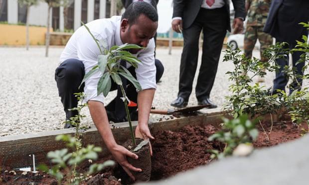 Kỷ lục đáng nể của Lục địa Đen: Trong 12 giờ, Ethiopia trồng được 350 triệu cây xanh - Ảnh 1.