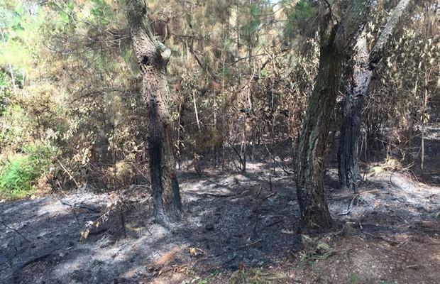 Tạm giam thanh niên đốt hơn 8.000m2 rừng cho vui - Ảnh 2.
