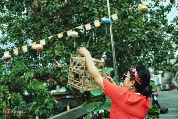 Nỗi buồn chuyện phóng sinh ngày rằm tháng 7: Những chú chim kiệt sức ngay khi được thả về trời - Ảnh 3.