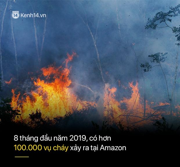 8 tháng 100.000 vụ cháy, thảm họa tầm cỡ địa cầu: Đây là tình hình cháy rừng đang diễn ra tại Amazon vào lúc này - Ảnh 3.