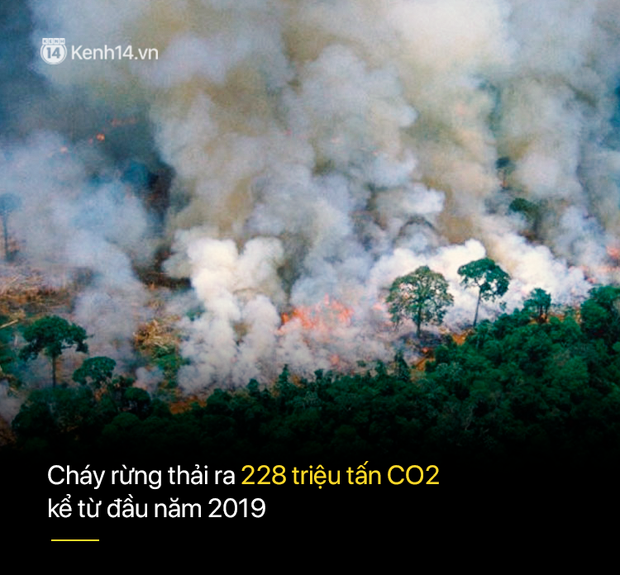 8 tháng 100.000 vụ cháy, thảm họa tầm cỡ địa cầu: Đây là tình hình cháy rừng đang diễn ra tại Amazon vào lúc này - Ảnh 4.