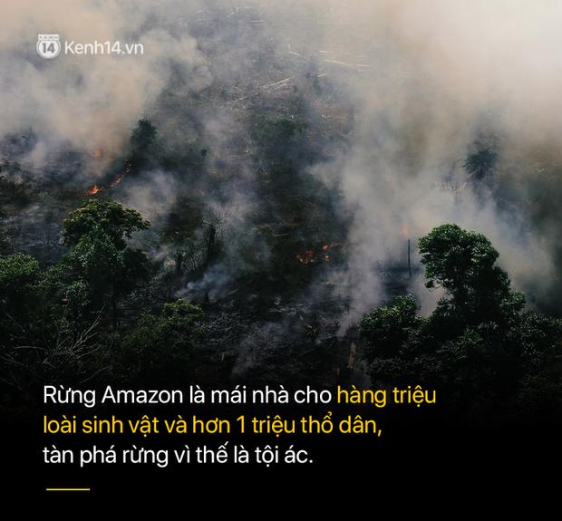 8 tháng 100.000 vụ cháy, thảm họa tầm cỡ địa cầu: Đây là tình hình cháy rừng đang diễn ra tại Amazon vào lúc này - Ảnh 8.