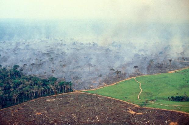 """Thảm họa của thế kỉ 21: Rừng Amazon có thể tự dập lửa nhưng bị chính con người """"bức tử"""" và sự trả thù của thiên nhiên sẽ vô cùng tàn khốc - Ảnh 2."""