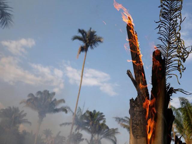 """Thảm họa của thế kỉ 21: Rừng Amazon có thể tự dập lửa nhưng bị chính con người """"bức tử"""" và sự trả thù của thiên nhiên sẽ vô cùng tàn khốc - Ảnh 5."""