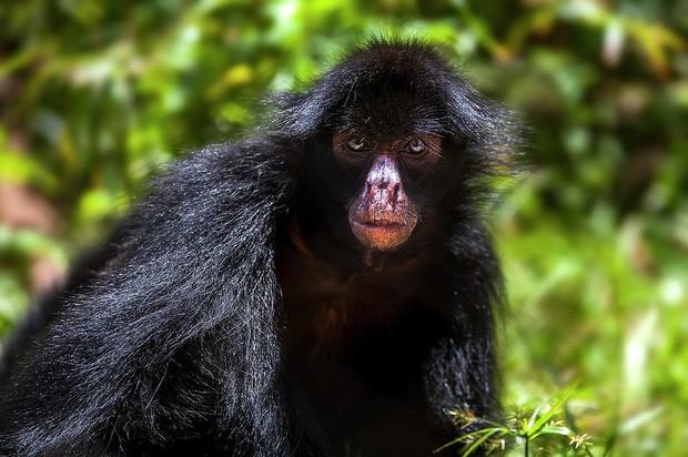 10% loài động vật trên hành tinh như sống trong hỏa ngục vì cháy rừng Amazon: Hậu quả kinh khủng hơn bất kì vụ cháy rừng nào khác - Ảnh 11.