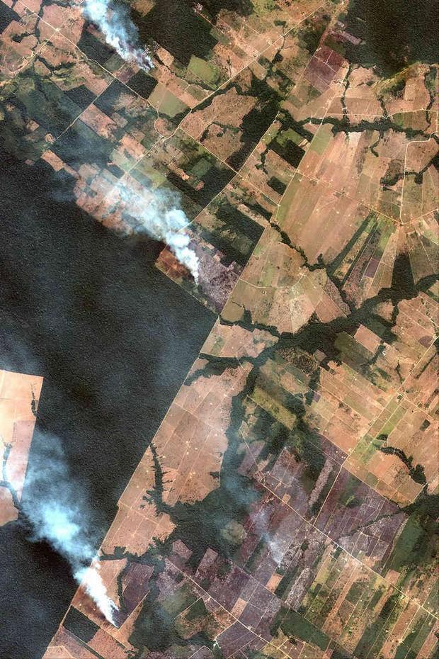 Ai nướng cháy lá phổi xanh Amazon của Trái đất? - Ảnh 2.