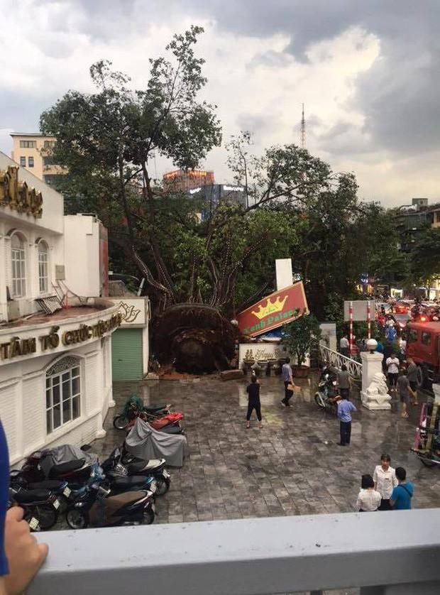 Cây xanh đổ khắp Hà Nội do ảnh hưởng của bão số 4, một thanh niên 26 tuổi tử vong thương tâm - Ảnh 23.