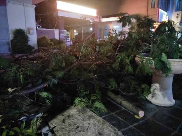 Cây xanh đổ khắp Hà Nội do ảnh hưởng của bão số 4, một thanh niên 26 tuổi tử vong thương tâm - Ảnh 24.