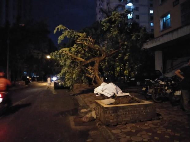 Cây xanh đổ khắp Hà Nội do ảnh hưởng của bão số 4, một thanh niên 26 tuổi tử vong thương tâm - Ảnh 25.