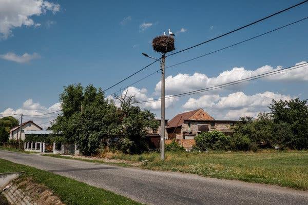 Ngôi làng Ba Lan 10 năm không sinh được con trai: Nghe thì vô lý nhưng toán học lại có lời giải thích thuyết phục - Ảnh 4.