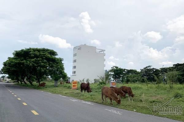 Chuyện lạ ở TP.HCM: Nơi giá đất 300 triệu đồng/m2, biệt thự xây dở không người ở - Ảnh 5.