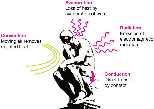 Giải ngố: Khi nào bật quạt còn khiến bạn thấy nóng hơn, tăng nguy cơ sốc nhiệt? - Ảnh 2.