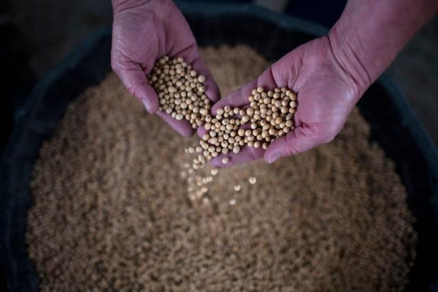 Hy vọng đạt được thoả thuận thương mại, Trung Quốc nhượng bộ và hứa sẽ mua thêm nông sản của Mỹ - Ảnh 1.