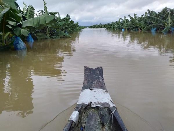 1.500ha trái cây của HAGL tại Lào bị ngập lụt - Ảnh 2.