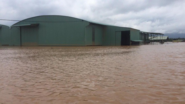 1.500ha trái cây của HAGL tại Lào bị ngập lụt - Ảnh 3.