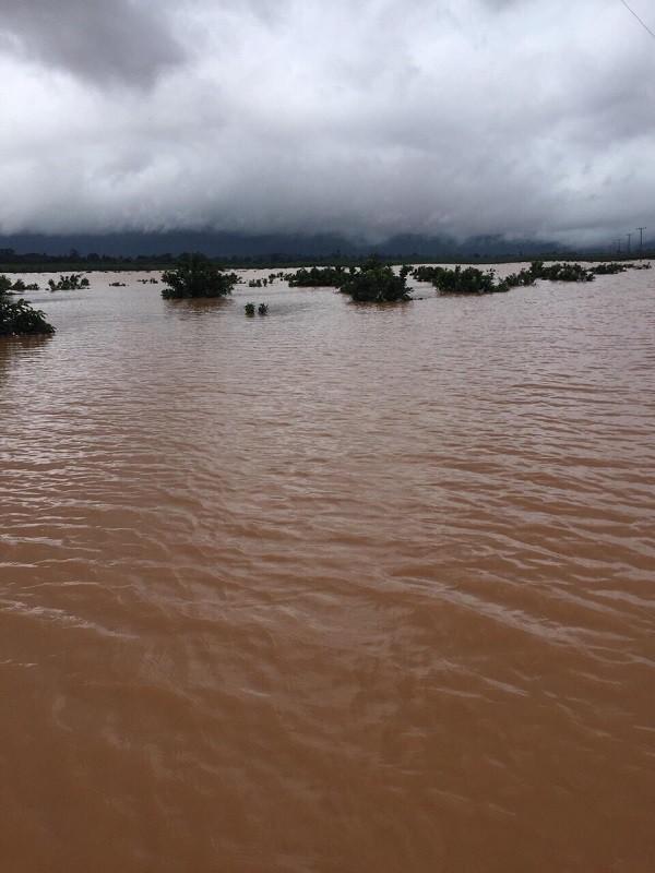 1.500ha trái cây của HAGL tại Lào bị ngập lụt - Ảnh 4.