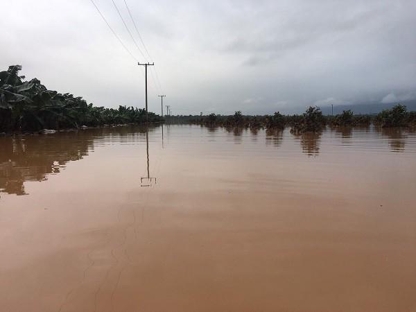 1.500ha trái cây của HAGL tại Lào bị ngập lụt - Ảnh 7.