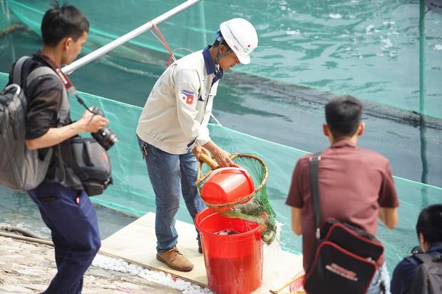 Chuyên gia Nhật thả cá Koi xuống sông Tô Lịch để chứng minh chất lượng nước sau khi xử lý - Ảnh 8.