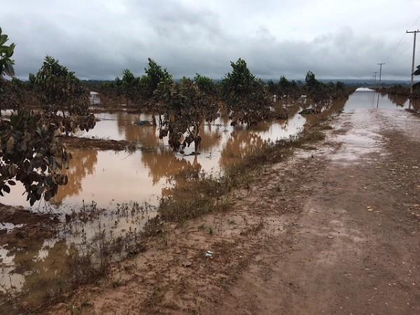 1.500ha trái cây của HAGL tại Lào bị ngập lụt - Ảnh 8.
