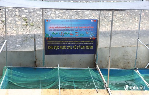 Cá Koi chết tại sông Tô Lịch có bị phá hoại? - Ảnh 1.