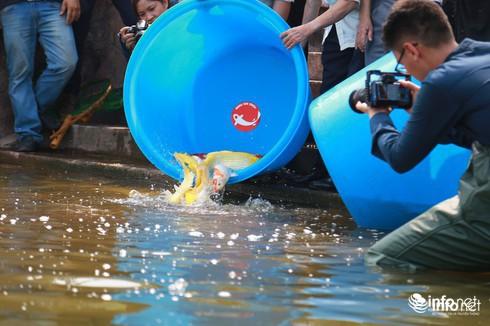 Cá Koi chết tại sông Tô Lịch có bị phá hoại? - Ảnh 10.