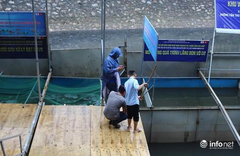Cá Koi chết tại sông Tô Lịch có bị phá hoại? - Ảnh 3.