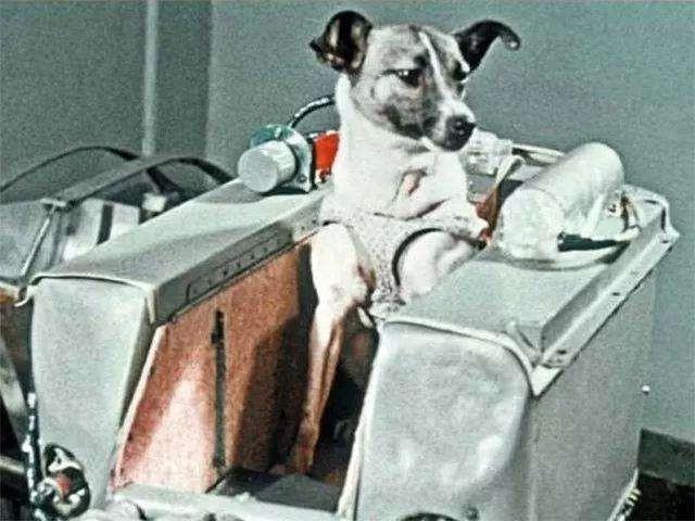 Góc tối của khoa học vũ trụ: Laika - chú chó duy nhất bị trôi dạt ngoài không gian - Ảnh 1.