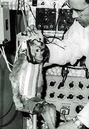 Góc tối của khoa học vũ trụ: Laika - chú chó duy nhất bị trôi dạt ngoài không gian - Ảnh 2.