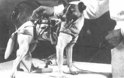 Góc tối của khoa học vũ trụ: Laika - chú chó duy nhất bị trôi dạt ngoài không gian - Ảnh 3.