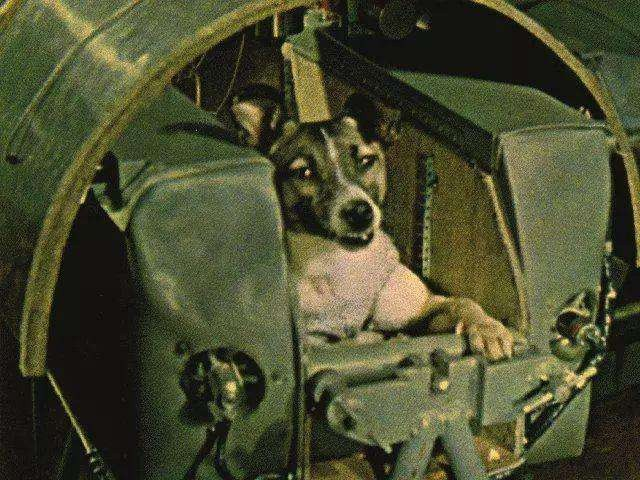 Góc tối của khoa học vũ trụ: Laika - chú chó duy nhất bị trôi dạt ngoài không gian - Ảnh 4.