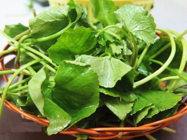 Công dụng tuyệt vời của cây rau má, giúp hạ men gan khi dùng thuốc điều trị ung thư mà không phải ai cũng biết - Ảnh 1.