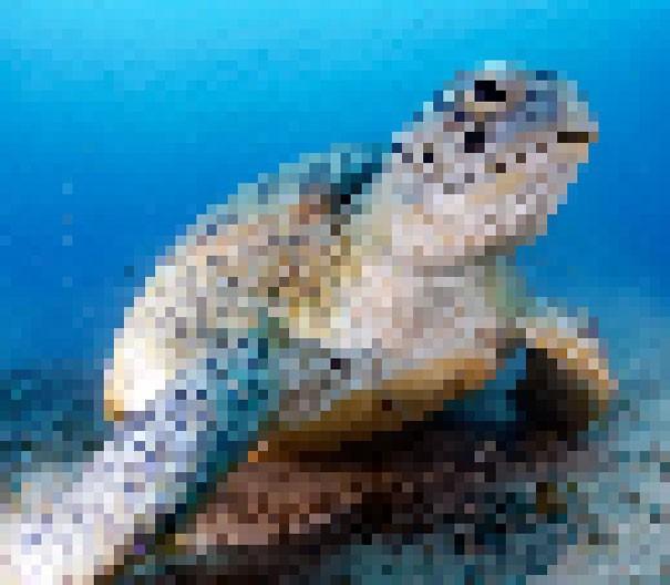 Sự thật đáng buồn về 22 bức tranh của các loài động vật có số lượng pixel tương ứng với số cá thể còn sống - Ảnh 17.