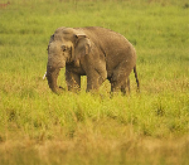 Sự thật đáng buồn về 22 bức tranh của các loài động vật có số lượng pixel tương ứng với số cá thể còn sống - Ảnh 19.