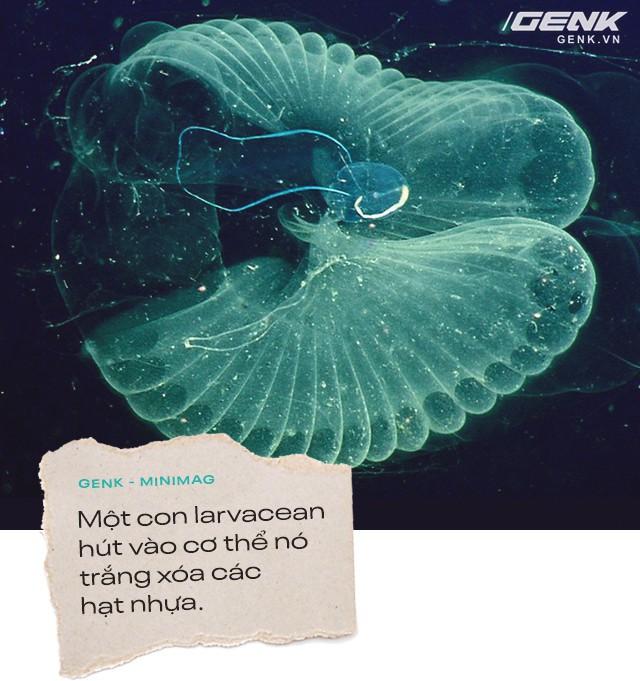 Hạt vi nhựa: Nỗi xấu hổ về nền văn minh của chúng ta với hậu thế - Ảnh 3.