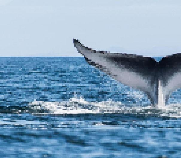 Sự thật đáng buồn về 22 bức tranh của các loài động vật có số lượng pixel tương ứng với số cá thể còn sống - Ảnh 8.