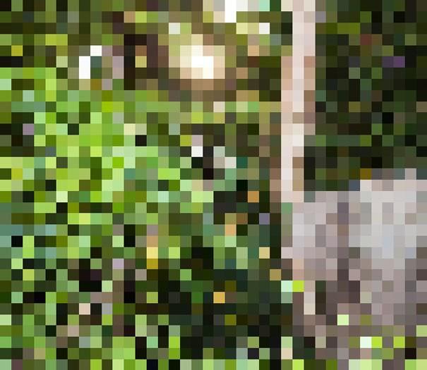 Sự thật đáng buồn về 22 bức tranh của các loài động vật có số lượng pixel tương ứng với số cá thể còn sống - Ảnh 11.