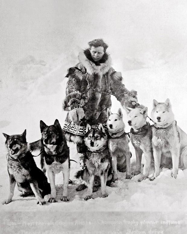 Câu chuyện có thật về 150 chú chó husky anh hùng từng cứu sống ngôi làng 10.000 người khỏi căn bệnh bạch hầu tử thần - Ảnh 2.